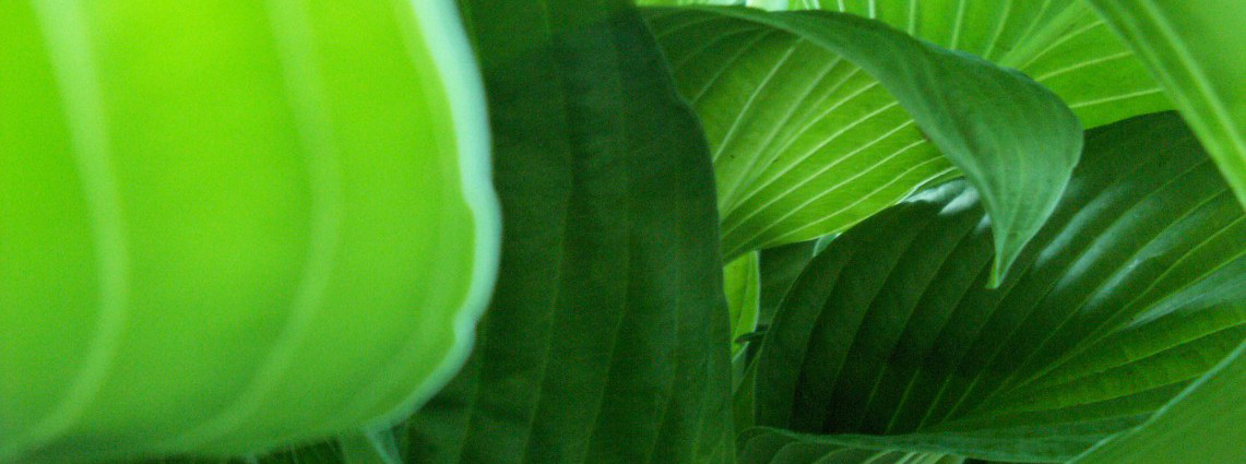 20110621_StrategyCorner_Kittler_Im Dschungel helfen Kanäle